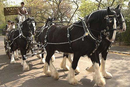 3c025-horse16
