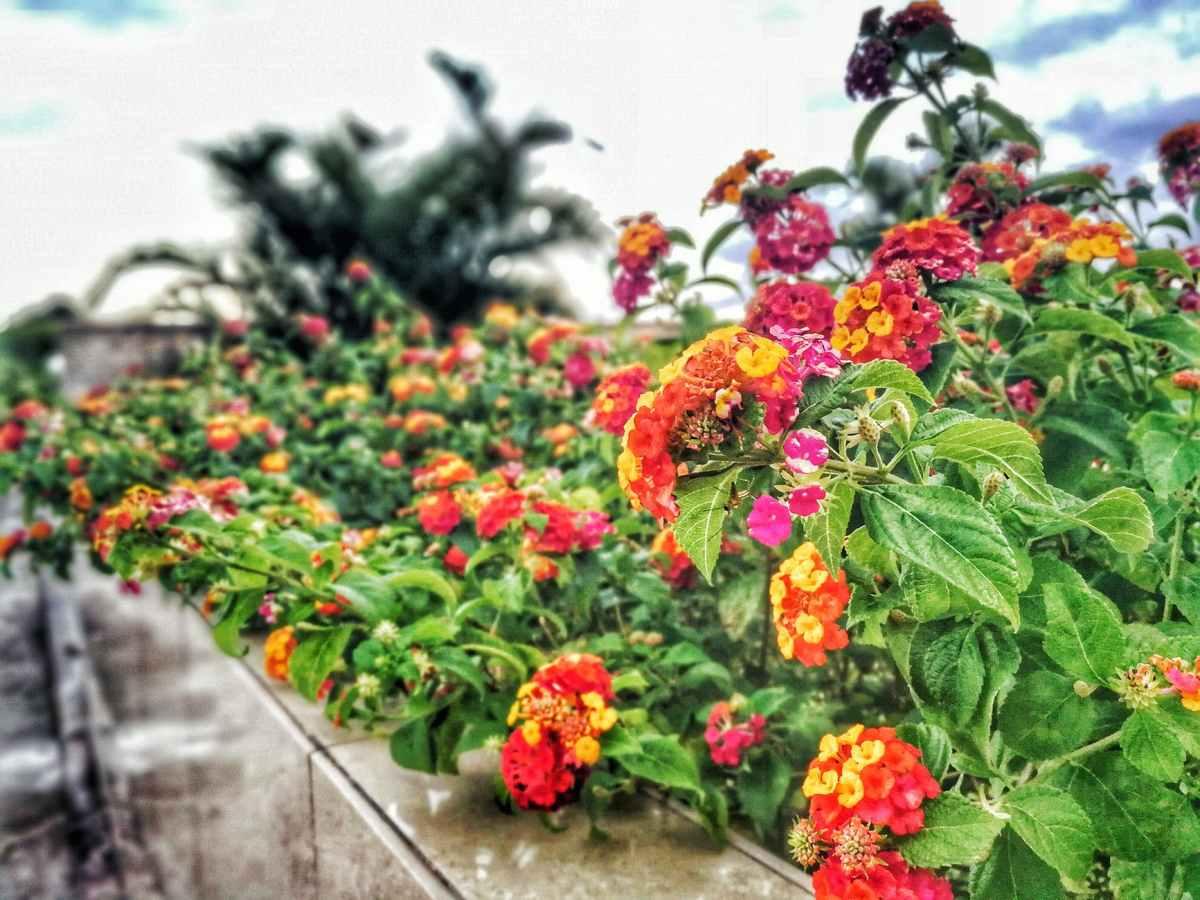Il fiore dell'EastEnd